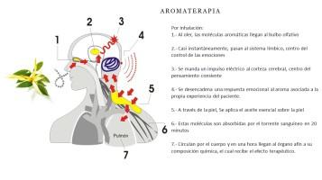 Aromaterapia Vidya Botiquin terapia mágica